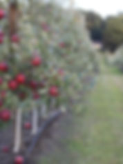RubyFrost.jpg