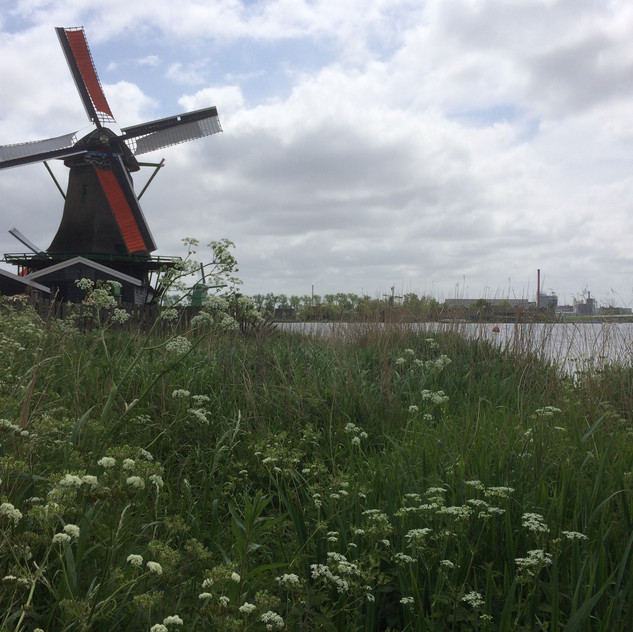 Working windmills