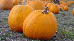 kfor - pumpkin smash fest.jpg