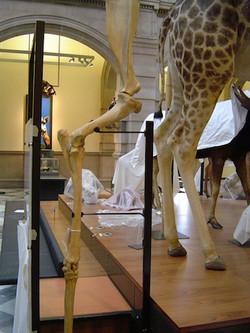 Giraffe leg mount