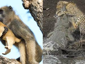 Best Wildlife Sightings of 2020