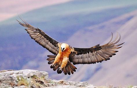 sani-pass-birding-tour.jpg