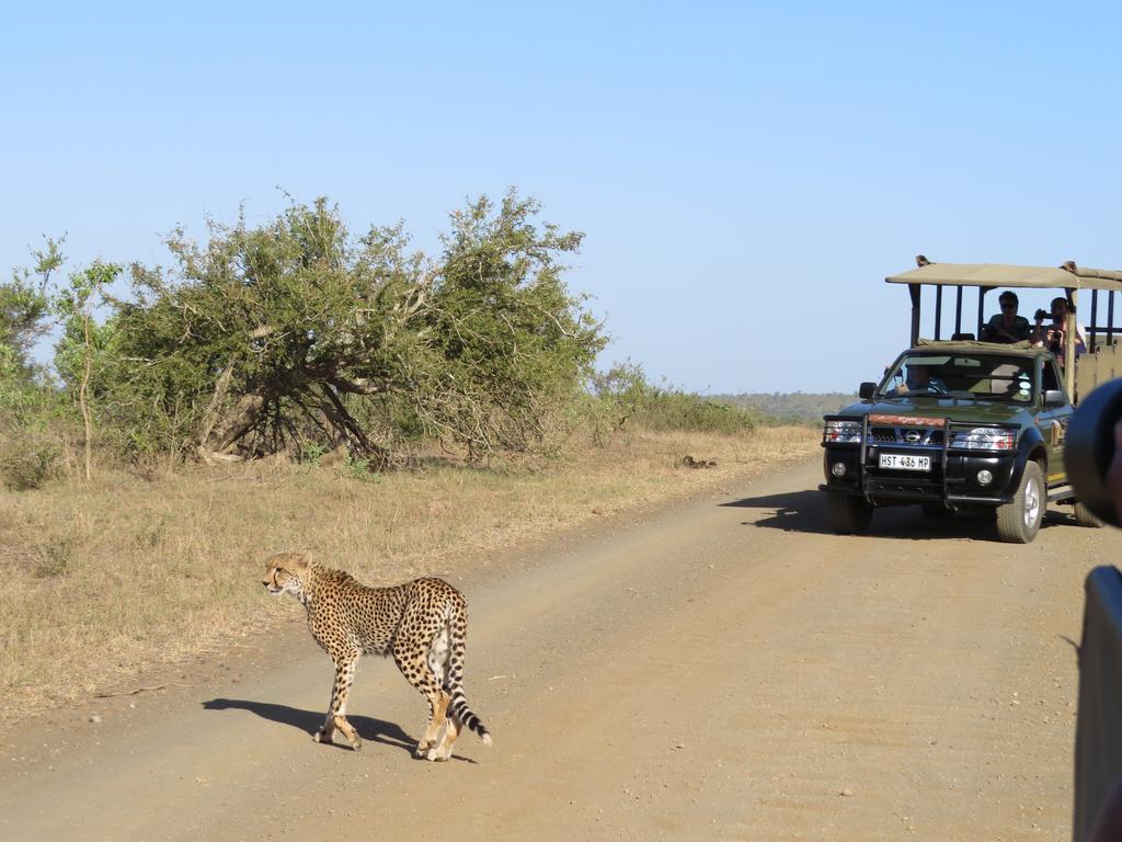 Cheetah on a game drive from Phumula