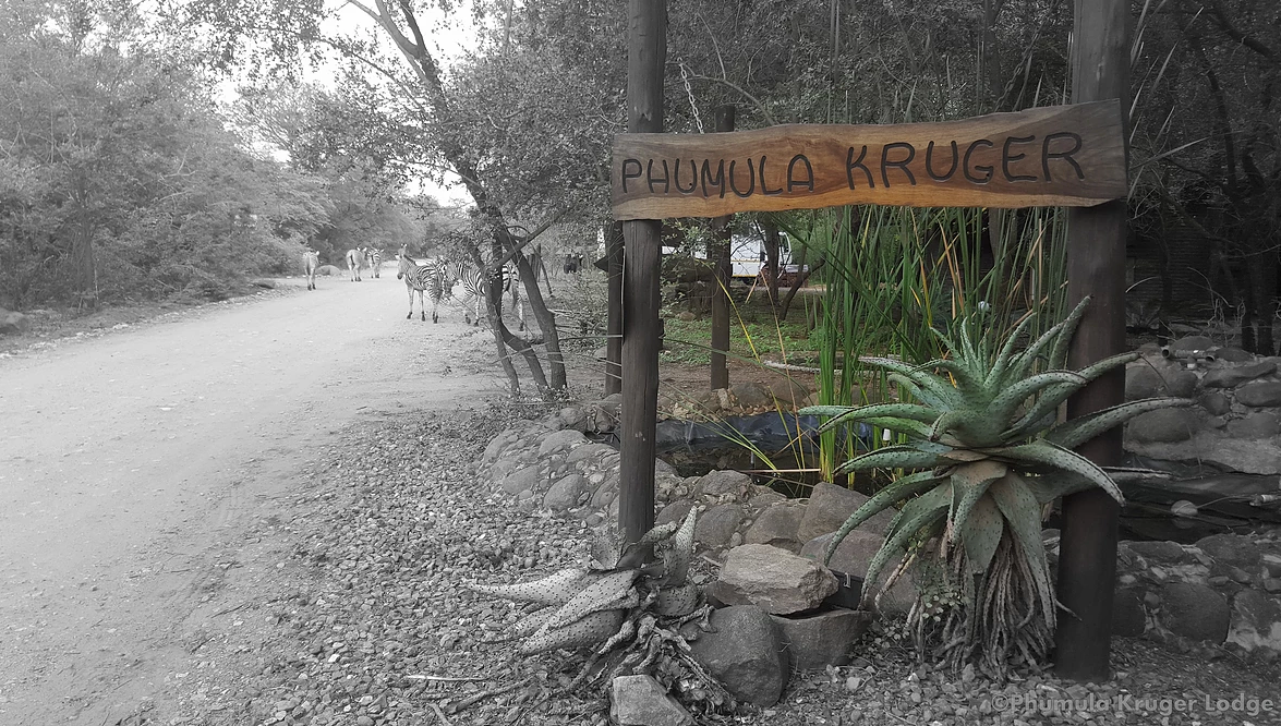 Welcome to Phumula Kruger
