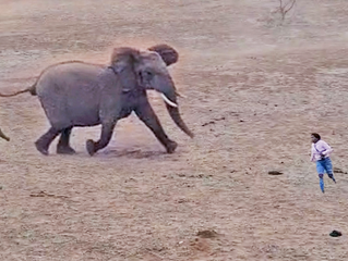 Elephants Show Tourists Why You Shouldn't Get Out Your Car