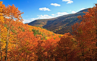catskill-mountains-foliage-CATDRINK1019.