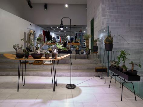 【JOYCE x Plants of Gods 期間限定展覽】植物珍品與匠心品牌設計