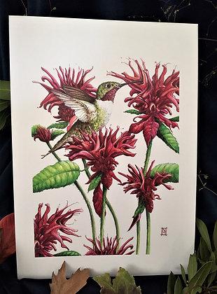 Hummingbird A3 Print