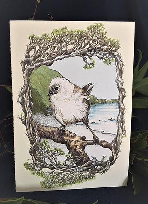 Whitehead /Popokotea C6 Card