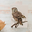 Thumbnail: Morepork Light C6 Card