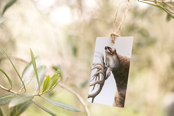 Stag Gift Tag