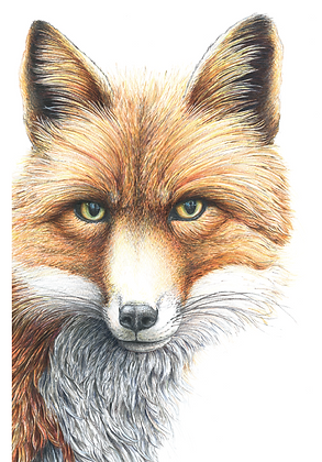 'Grace' Fox SRA2 Open Edition Print
