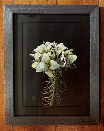 'Royals' - Original Lilies Artwork