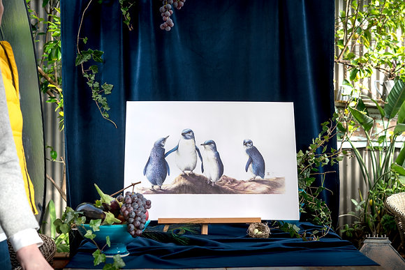 Little Blue Penguins B3