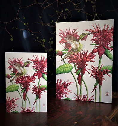 Hummingbird C6 card