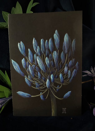 Lily of The Nile - Blue Agapanthus C6 Card
