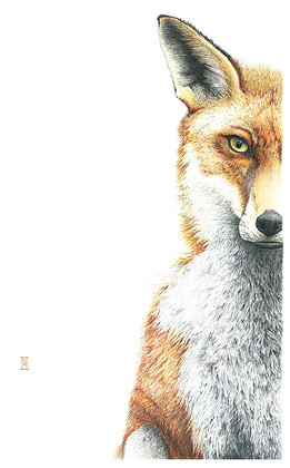 Interlude with a Fox - Sold out