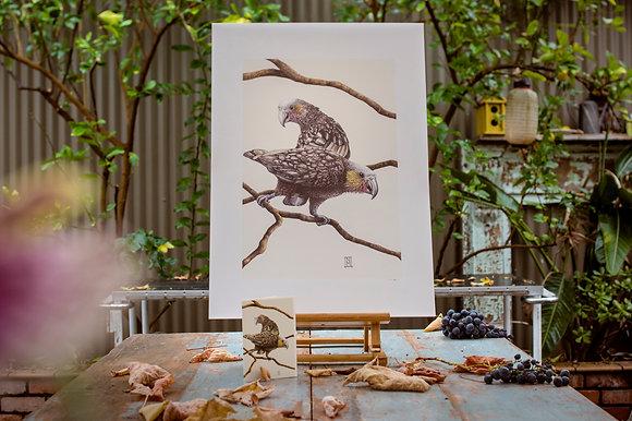 Kaka Birds SRA2 print