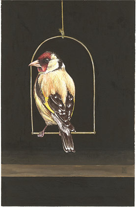 Goldfinch   A3