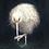 Thumbnail: White Kiwi   A3
