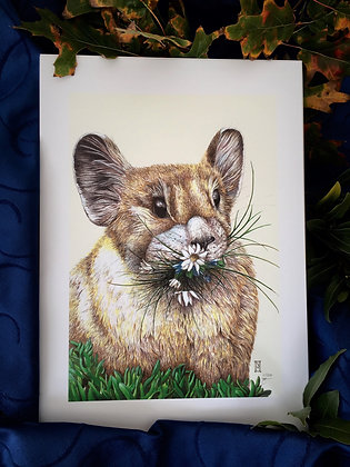 Little Chief Hare A3 Print