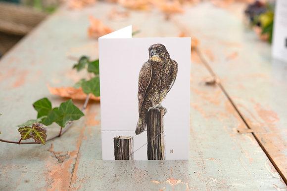 Karearea (NZ Falcon) C6 Card