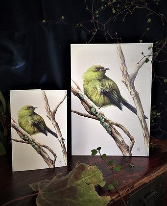 Korimako (Bellbird) card
