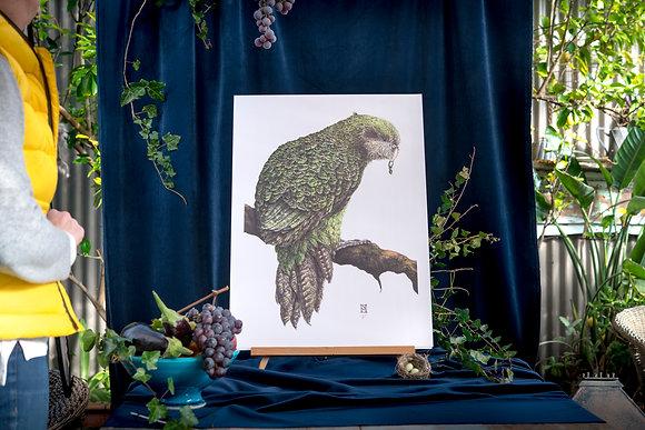 Kakapo B3
