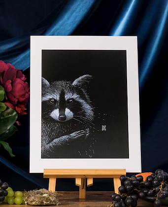 Raccoon A3