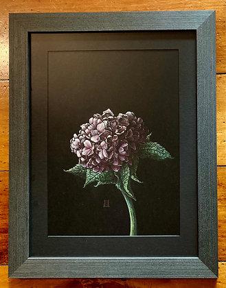 'Summertime' - Original Hydrangea Artwork