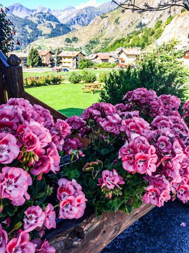 B&B Il Ciliegio fiori