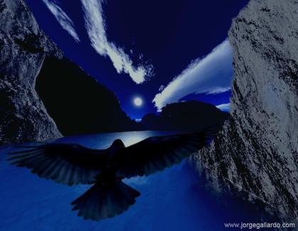 48_freebird72dpi85x11.jpg