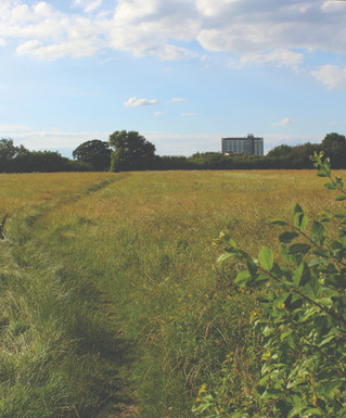Share your thoughts about Tolworth's green and open spaces