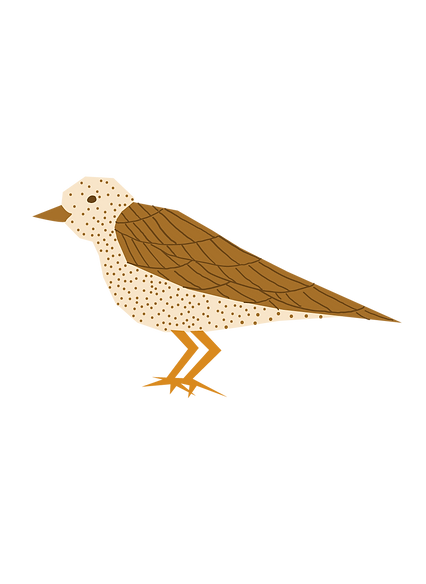 song-thrush.png