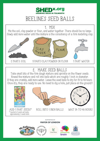 BeeLines Seed Ball Workshops