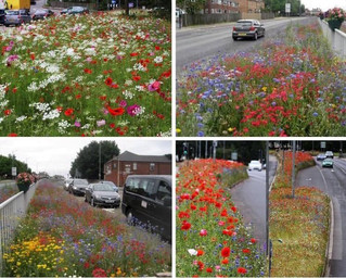 Bee Friendly Planted Verges at New Malden Station and Open Design Call