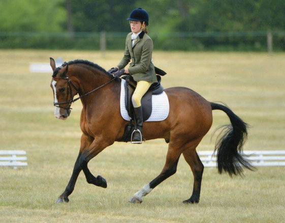 19.8.21 Flatwork with Catherine Cundall