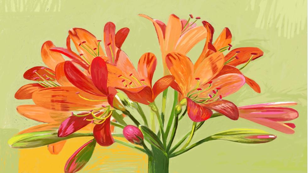 'Kaffir Lily'