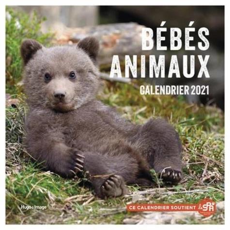 Bébés Animaux. Edition 2021