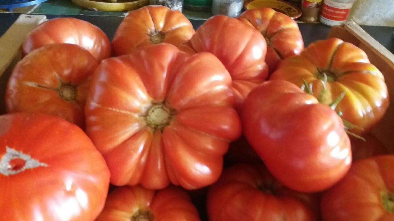 tomates jardin pension