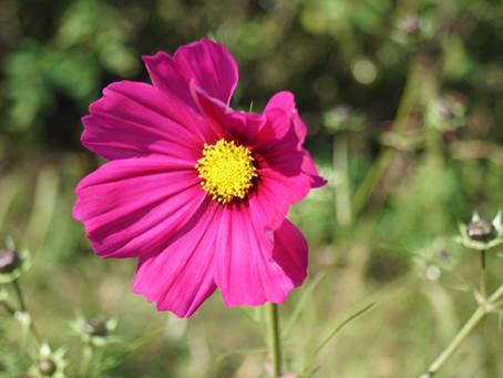 Ces fleurs qui égayent notre jardin
