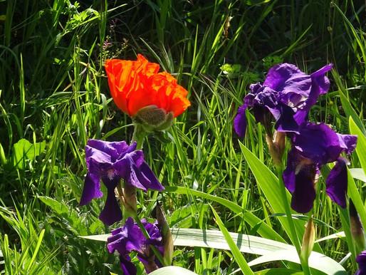 Ces belles fleurs de printemps