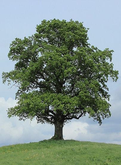tree-773736_b_edited_edited.jpg