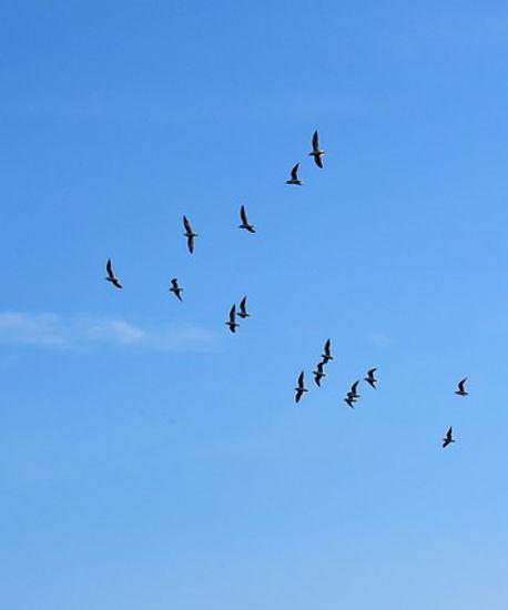 gulls-3135962_640.jpg