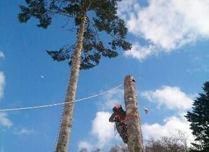 室蘭伐採作業日誌