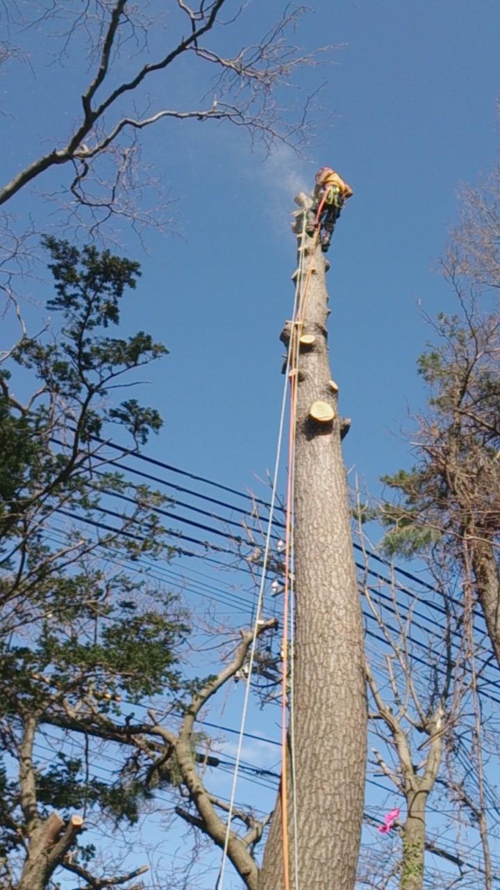 特殊伐採をする空師