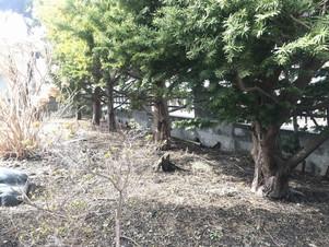 実家の庭木を伐採する|北海道|空師の現場から(番外編)