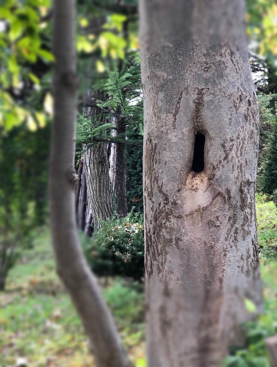 木の幹にできたうろ(空洞)