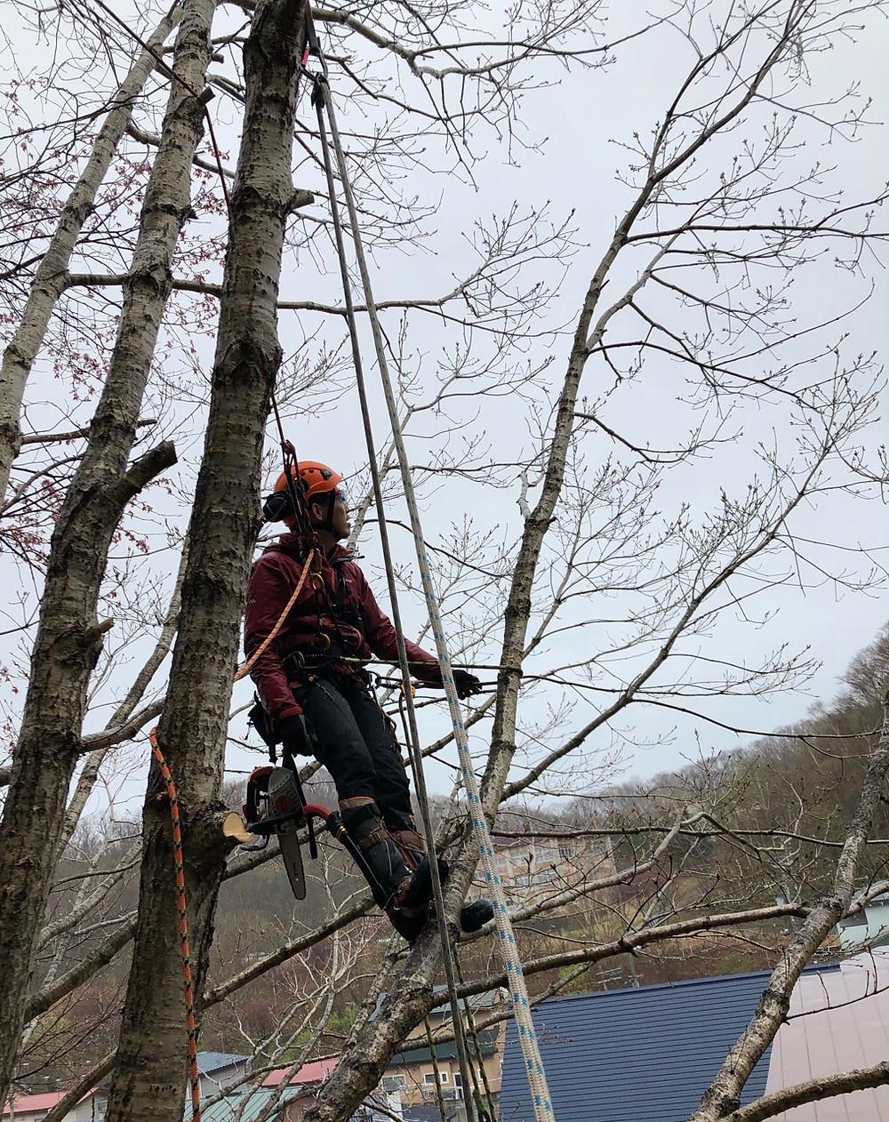 斜面の細い木の特殊伐採