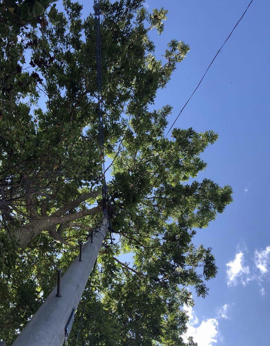 電線にかぶる枝